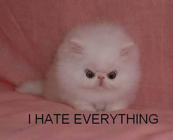 i hate everything white kitten lol cat macro
