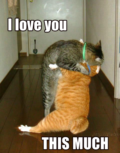 i love you ilu this much lol cat macro
