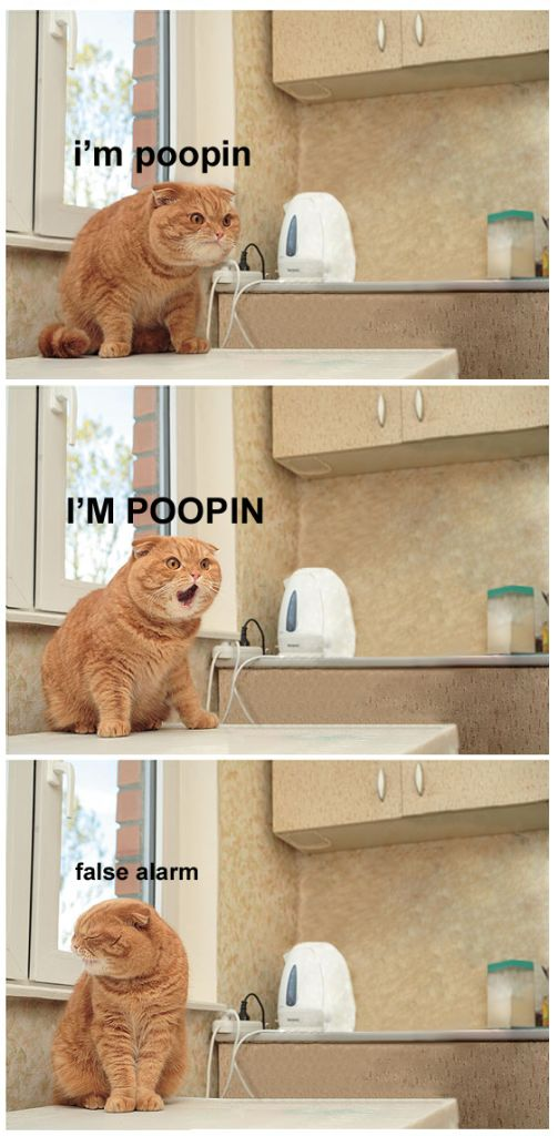 im pooping cat false alarm lol cat macro