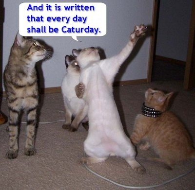 it is written caturday biblical speech lol cat macro
