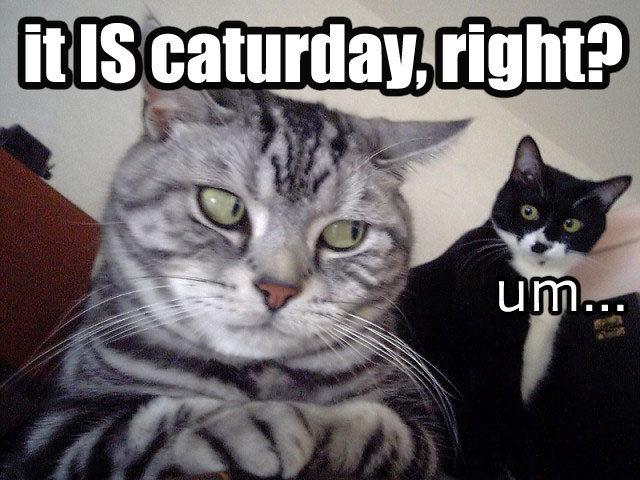 it is caturday right um traitor among us lol cat macro