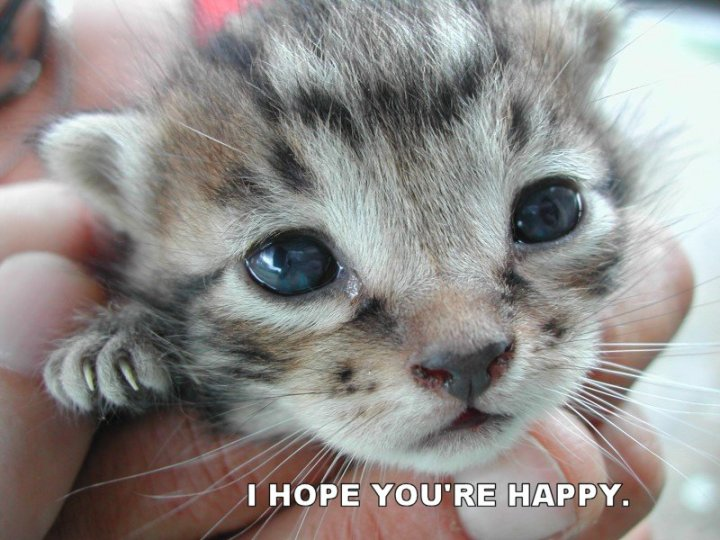 i hope youre your happy kitten lol cat macro