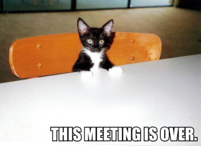 meeting over kitten at table lol cat macro