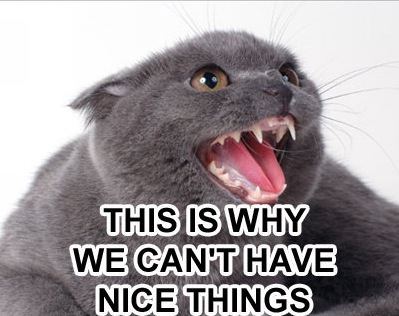 this is why we cant have nice things angry cat macro
