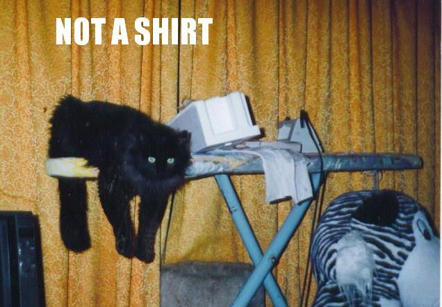 not shirt ironing housework lol cat macro