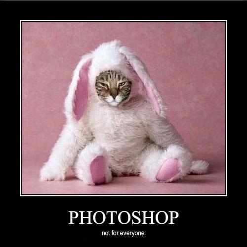 photoshop rabbit lol cat macro