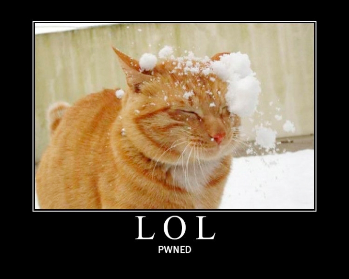 pwned cat snowball snow lol cat macro
