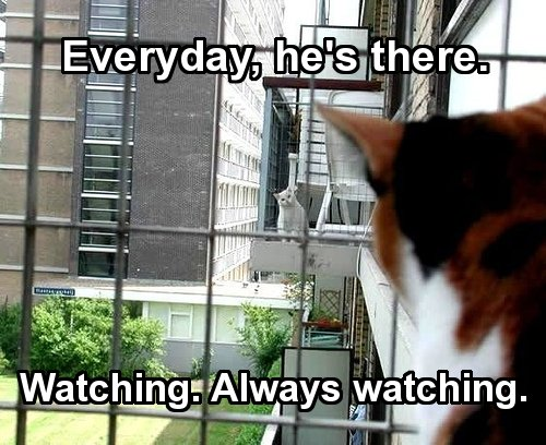 every day always watching spying lol cat macro
