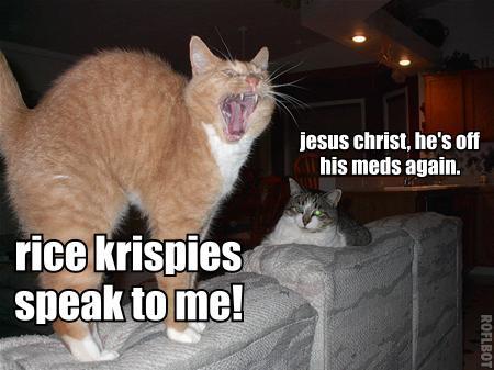 rice krispies speak to me crazy insane lol cat macro