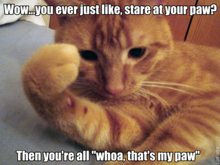 stoned cat stare at paw lol cat macro