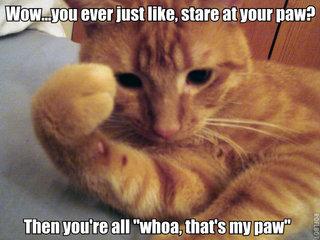 stoned cat stare at paw lol cat macro