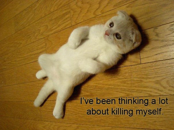 suicide suicidal kitty kill myself lol cat macro