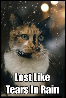 lost like tears in rain blade runner quote sadness lol cat macro