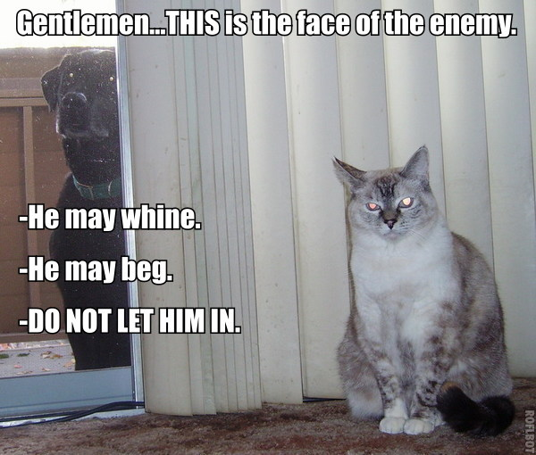 the face of the enemy dogs cats war lol cat macro