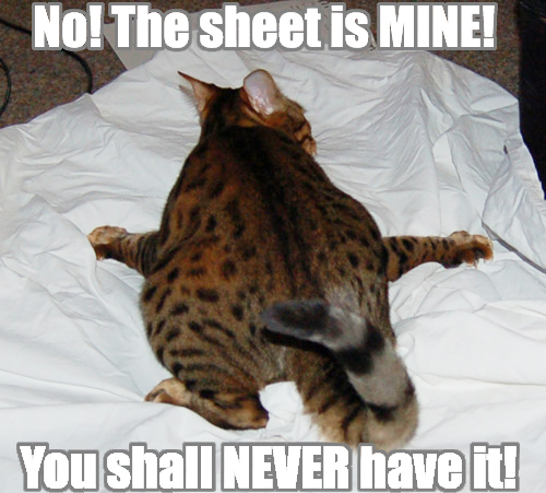 mine not yours you shall never have it sheet lol cat macro