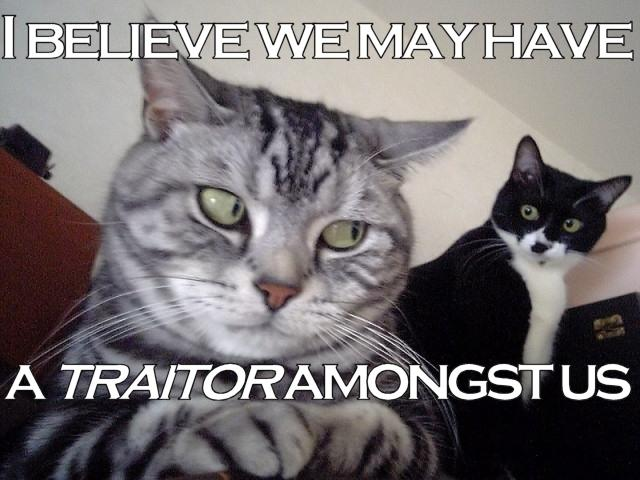 traitor amongst us treachery lol cats macro
