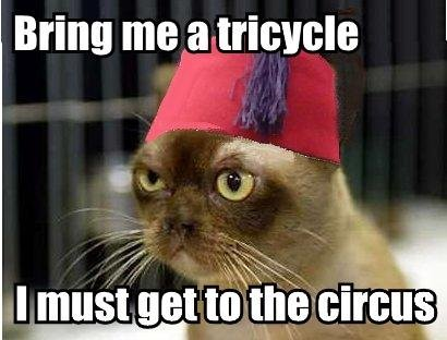 bring me tricycle bicycle circus fez red hat lol cat macro