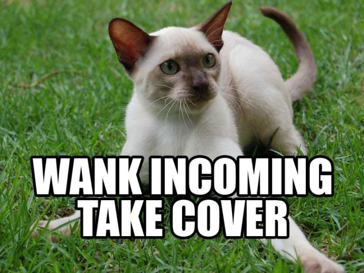 wank incoming take cover siamese look out lol cat macro