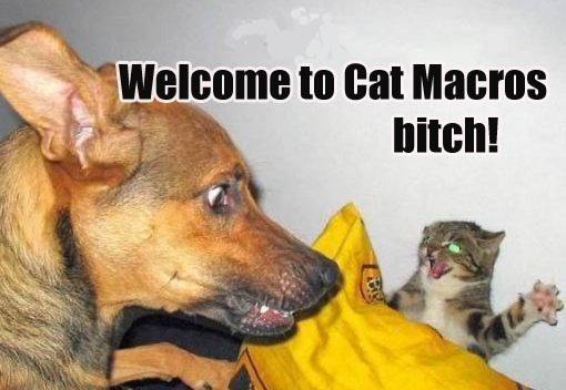 welcome to cat macros dog