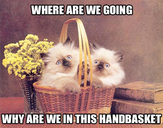 hell in a handbasket kittens lol cat macro