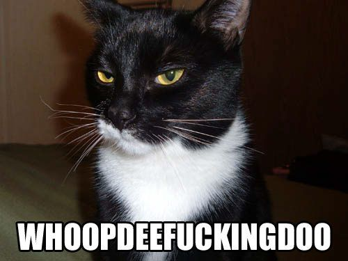 whoop dee fucking doo sarcastic lol cat macro