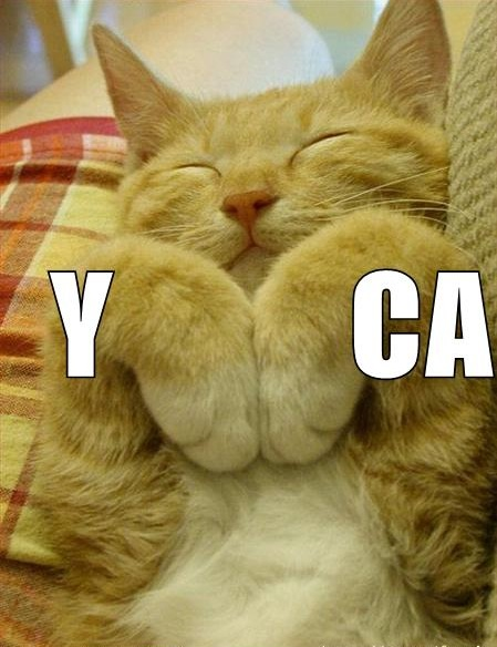 ymca lol cat macro