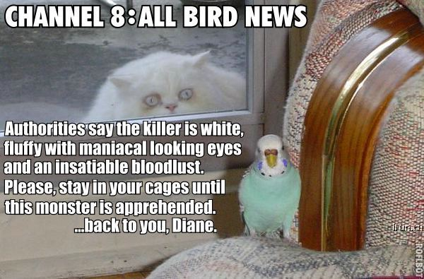 bird news killer white fluffy budgie bird lol cat macro