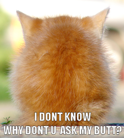 question ask my butt kitten lol cat macro
