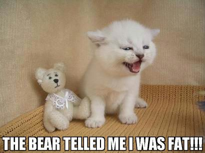 teddy bear said i was fat obese kitten lol cat macro