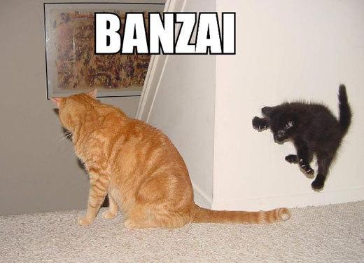 cats banzai kamikaze ninja japan lol cat macro