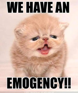 emogency waambulance kitten lol cat macro
