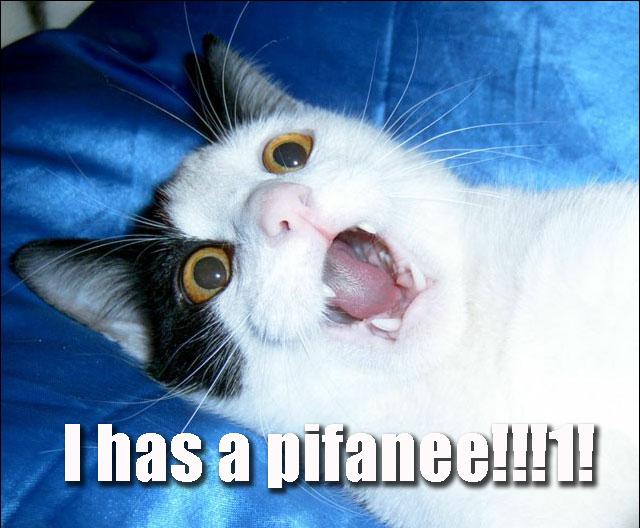 omg epiphany a pifanee lol cat macro