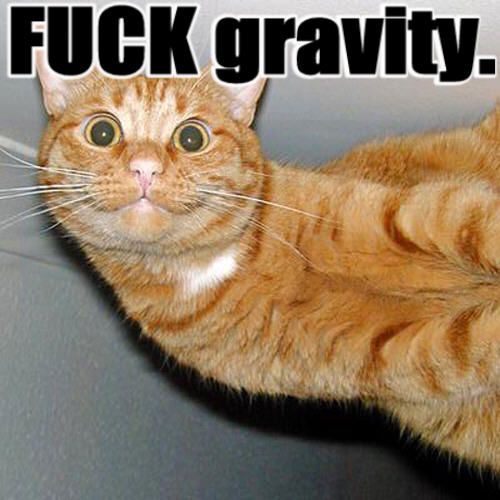 fuck gravity grabbity meme lol cat macro