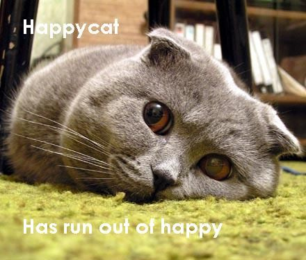 happy cat happiness sadness lol cat macro
