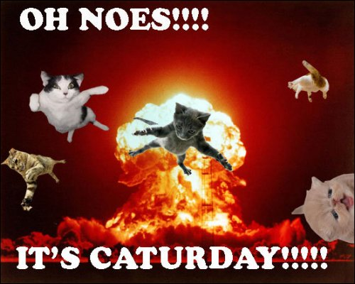 its caturday flying cats fire sky lol cat macro