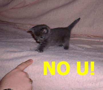 no u meme kitten pointy finger lol cat macro