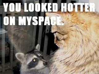 myspace racoon cat lol cat macro