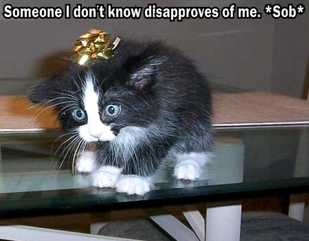 someone disapproves internets sob kitten bow lol cat macro