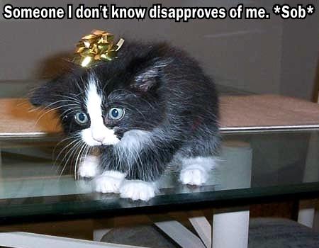 someone disapproves internets sob kitten bow lol cat macro