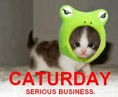srs bsns caturday frog costume kitten lol cat macro