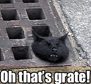 oh thats great grate head stuck in grate lol cat macro