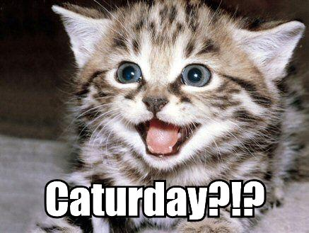 http://catmacros.files.wordpress.com/2009/10/caturday_happy_kitten.jpg
