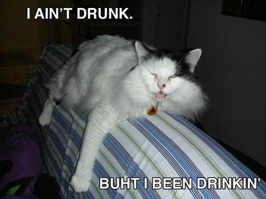 drunk cat booze alcohol drinking lol cat macro