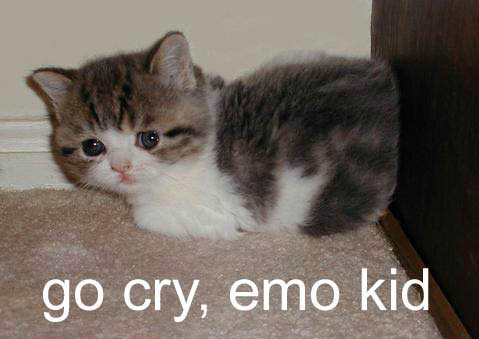 sad kitten go cry emo kid lol cat macro