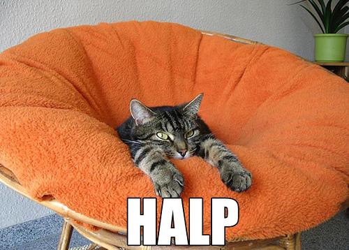 halp orange chair lol cat macro