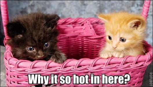 kittens hell in a handbasket lol cat macro