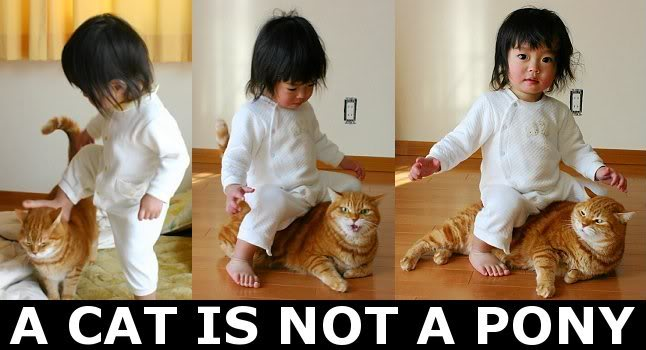 cat not pony little girl kid sitting on lol cat macro