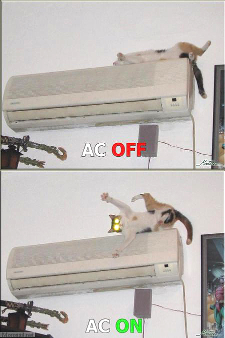 aircon off on air conditioning lol cat macro