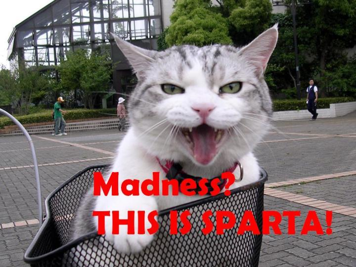 bikecat this is sparta meme japan image macro