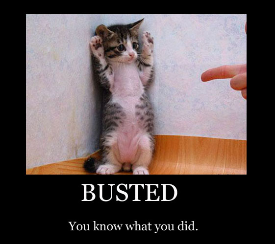 busted naughty kitten finger pointing hands up lol cat macro